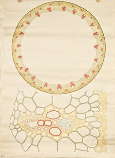 Anatomy of Plant Cells by Frederic Elfving 1929