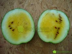 Honeydew, Avocado, Fruit, Compost, Lawyer