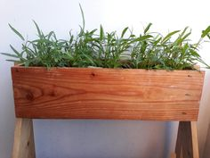 Water Spinach and wooden planter.