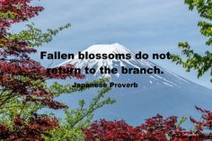 Japanese Proverbs – The Observer