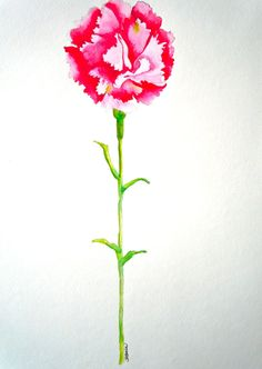 Carnation - Fine Art Original Watercolor - 11x15