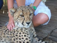 At Cheetah Outreach near Somerset West just outside CapeTown