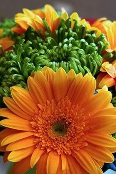 Orange and Green Flowers / Mums / Gerbera Daisies Rust Orange, Green And Orange, Orange Color, Flowers Nature, Beautiful Flowers, Flower Close Up, Colorful Party, World Of Color, Orange Blossom
