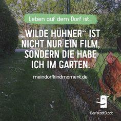 Heute Morgen frische Eier aus dem Garten geholt? - http://ift.tt/2rLXm2H - #dorfkindmoment #dorfstattstadt