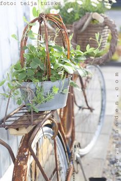 Here's another old bike ~ I wonder if it is one of doris's and now is a planter?.........................