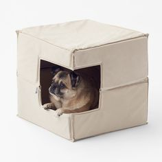 Japanese studio Nendo designed a range of dog accessories that are suited for minimally furnished homes – providing an alternative to the typically garish toys that the firm considers to be dominating the market.