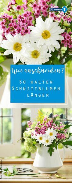 Wie bleiben Schnittblumen länger frisch? Mit diesen einfachen Tipps und Tricks zum Anschneiden vom Blumenstrauss wird er länger haltbar