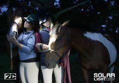 2C horses