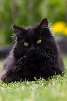 """""""De kat heeft zich voorgenomen om voor de mens een raadsel te blijven."""" - Eugen Skasa- Weiss ❤"""