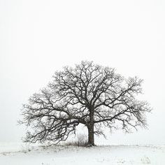 Creative iPhone Photos of One Tree for a Whole Year by Mark Hirsch
