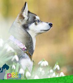 Buenos días amig@s ☀️  #PetsWorldMagazine #RevistaDeMascotas #Panama #Mascotas #MascotasPanama #MascotasPty #PetsMagazine #MascotasAdorables #Perros #PerrosPty #PerrosPanama #Pets #PetsLovers #Dogs #DogLovers #DogOfTheDay #PicOfTheDay #Cute #SuperTiernos