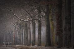 Protected by giants by sdingemans49