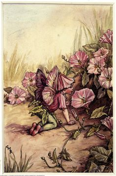 The Convulvulus Fairy, painted by Cicely Mary Barker for the first edition of her book 'Flower Fairies of the Summer' (1925).  For production reasons, this illustration no longer appears in the book today.  										   																										Author / Illustrator  								Cicely Mary Barker