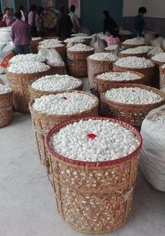What Is Cultivated Silk & Sericulture. Cultivated Silk is an alternate name of Mulberry Silk, refer to silks that are produced by silkworms eating mulberry leaves. Sericulture, or silk farming,