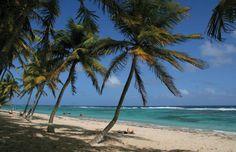 Gorgeous Guadeloupe: 8 Perfect Beaches: Plage Anse Petite Riviere, La Desirade