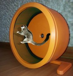 Sugar Glider exercise wheel  www.gumtree.co.za