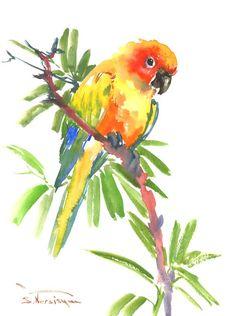 sun conure watercolor | Conure, Sun Parakeet original watercolor painting, 9 X 12 in, rainbow ...