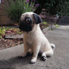 This Pug sculpture is needle felted with 100% wool with plastic nose and eyes. look at his cute feetsies