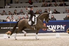 Charlotte Dujardin & Valegro ~ This Dutch Warmblood has one of the most beautiful extended trots. Absolutely stunning..... and his rider took Indiviual Gold in London at the age of 26.