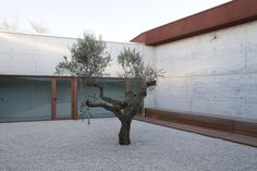Gallery of Day Center and Home for the Elderly of Blancafort / Guillem Carrera - 10