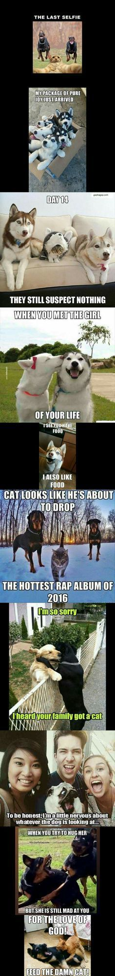The 10 Funniest Memes ft. Funny Dogs and Cats # CatMemes- # catmemes # . The 10 Funniest Memes ft. Funny Dogs and Cats # catmemes Funny Animal Jokes, Funny Dog Memes, Funny Animal Pictures, Cute Funny Animals, Animal Memes, Cat Memes, Funny Cute, Funny Dogs, Funniest Memes