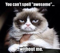 """You can't spell """"awesome"""" without me."""