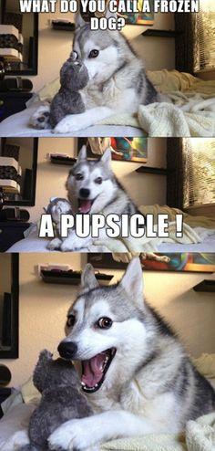 Husky Humor, Funny Husky Meme, Funny Dog Jokes, Funny Animal Quotes, Crazy Funny Memes, Funny Animal Pictures, Funny Dogs, Pun Husky, Relationship Tips