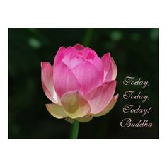 Today today today by Buddha Custom Posters, Custom Framing, Buddha, Print Design, Create, Day, Artwork, Flowers, Prints