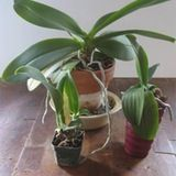 Orchids that would benefit from being repotted.