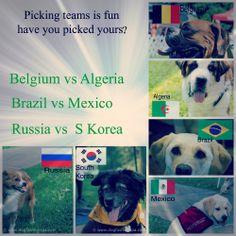 Soccer Fans, make your predictions! #FIFA #Worldcup2014 #Soccerfever #BelgiumvsAngeria #BrazilvsMexico #RussiavsKorea #soccer #soccerdogs