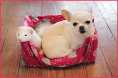 Chihuahua & Ferret. Best Friends This is so smart. It looks like a box covered in fleece. I can never find beds small enough for Lu.
