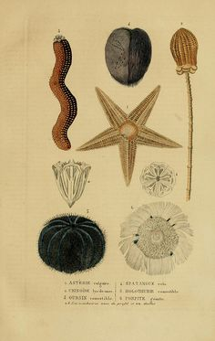 n400_w1150 by BioDivLibrary, via Flickr