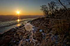 The morning of the full lunar eclipse.  The sun breaks over a frozen lake illuminating an icy plant.