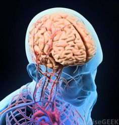 """Descubren la zona del cerebro de pacientes con esquizofrenia que """"oyen voces"""""""