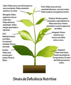 falta de nutrientes nas plantas - Pesquisa Google