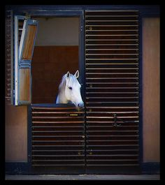 spanish riding school stables, wien