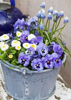 When the pansies emerge, it is a sure spring sign. You can put out flowers . - When the pansies emerge, it is a sure spring sign. You can put the flowers out early, they can hand - Shade Perennials, Shade Plants, Container Flowers, Container Plants, Evergreen Container, Gemüseanbau In Kübeln, Pot Jardin, Pot Plante, Fall Planters