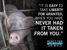 ALL animals deserve to be free.