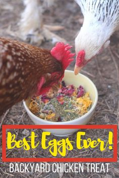 Need the best treats for chickens in winter? You should first know what can'… Need the best treats for chickens in winter? You should first know what can't chickens eat! Here's details! Chicken Garden, Backyard Chicken Coops, Chicken Coop Plans, Diy Chicken Coop, Building A Chicken Coop, Small Chicken Coops, Raising Backyard Chickens, Baby Chickens, Keeping Chickens