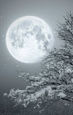 Moon and snow on tree