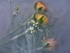 danielle rosemarie kwaaitaal