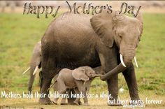 Mothers-day.jpg (960×638)