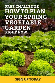Even if you're new to gardening you can create a garden plan you'll love! Take this free beginner-friendly challenge and learn step-by-step how to design your first garden. You'll learn how to choose the right plants for your yard and calculate the Spring Vegetable Garden, Vegetable Garden Design, Autumn Garden, Vegetable Gardening, Fruit Garden, Edible Garden, Fall Vegetables, Organic Vegetables, Growing Vegetables