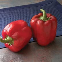 NGB Year of the Sweet Pepper: Red Bull Hybrid Pepper has excellent disease resistance. Available at HPS Growing Bell Peppers, Sweet Bell Peppers, Stuffed Sweet Peppers, Red Peppers, Bell Pepper Plant, Pepper Plants, Perennial Vegetables, Planting Vegetables, Cape Gooseberry