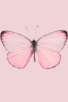 Light pale pastel pink butterfly moth insect nature iPhone android iPod background wallpaper lockscreen