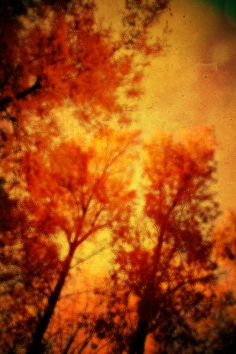 fall time trees