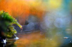Inspirational Photos, Dandelion, Facebook, Flowers, Plants, Painting, Art, Art Background, Dandelions