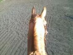 How to Handle a Scared Horse - Never hurts to refresh every now and then!