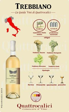 Trebbiano - The Wine Guide of, Food And Drinks, All Trebbiani in the Quattrocalici wine guide. All Trebbiano wines on Quattrocalici wine guide. Sweet White Wine, Wine Searcher, Wine News, Wine Guide, Grand Cru, Wine Brands, Cheap Wine, In Vino Veritas, Wine Parties