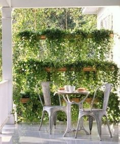 Using plants for privacy. I love this! The main reason I want to grow morning glories and wisteria!